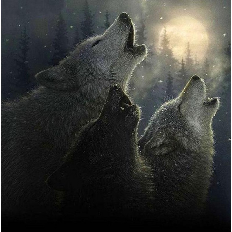Two Wolves 5D DIY Pa...