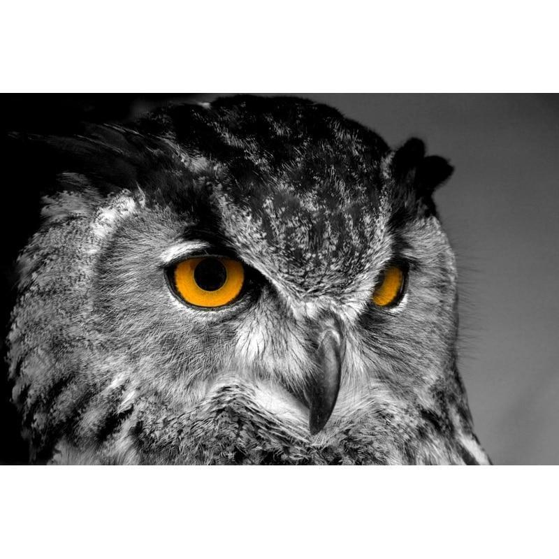 Owl From Owlery Pain...