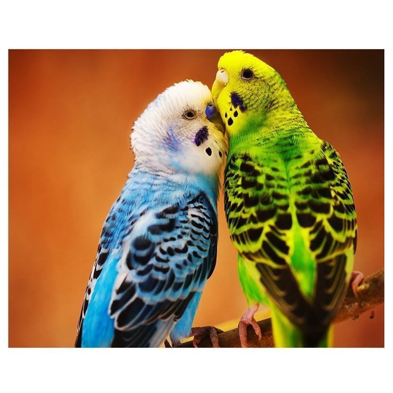 Parrot Picture of Re...