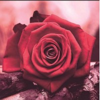 Red Rose 5D DIY Paint By ...